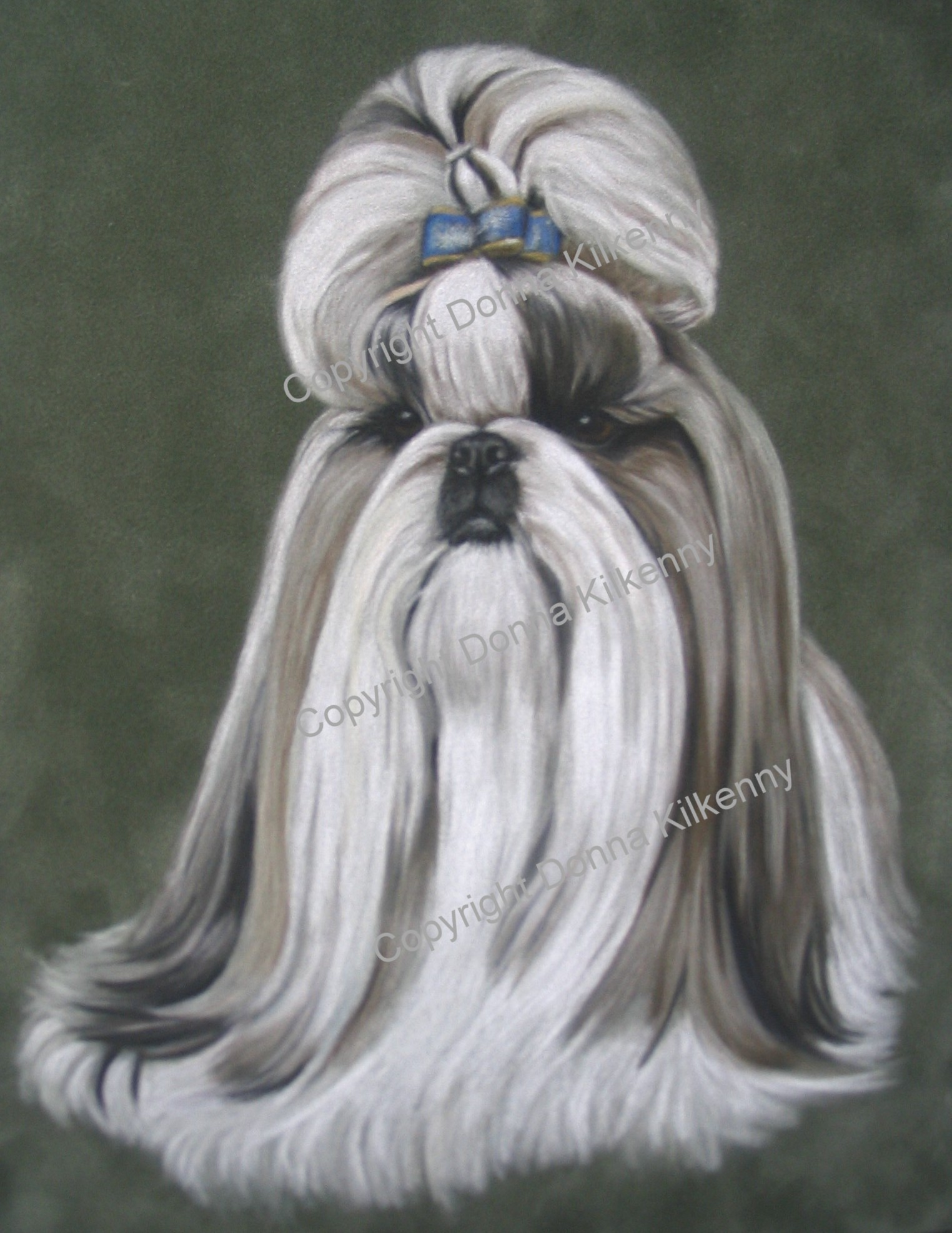 Care-Tzu, Care-Tzus, Cairn Shih-Tzu Hybrid Dogs